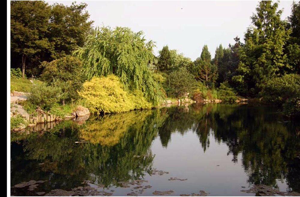 Shimizu Landscape Design: 6101 Bryn Mawr Ave, Glen Echo, MD