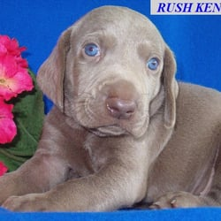 Rush Kennels Request A Quote Pet Services 6312 Maplewood St