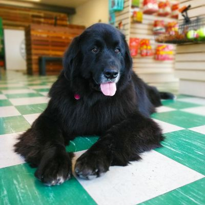 Dogromat 12926 venice blvd los angeles ca pet grooming mapquest solutioingenieria Image collections