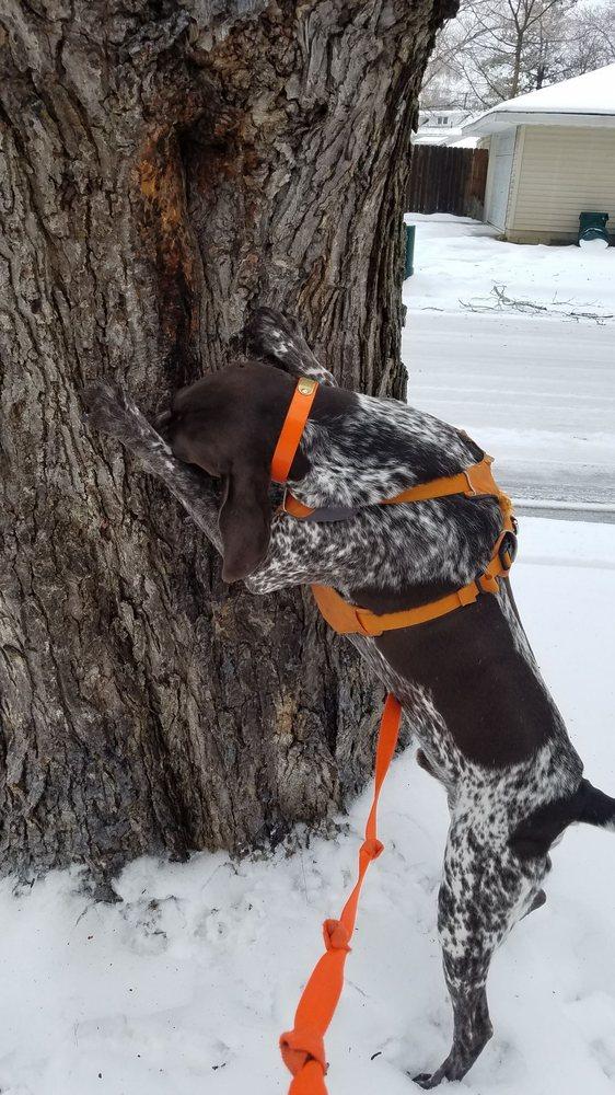 Fetch Pet Care Royal Oak - Birmingham: Royal Oak, MI