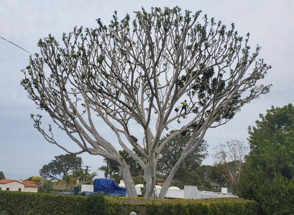 South California Arborists