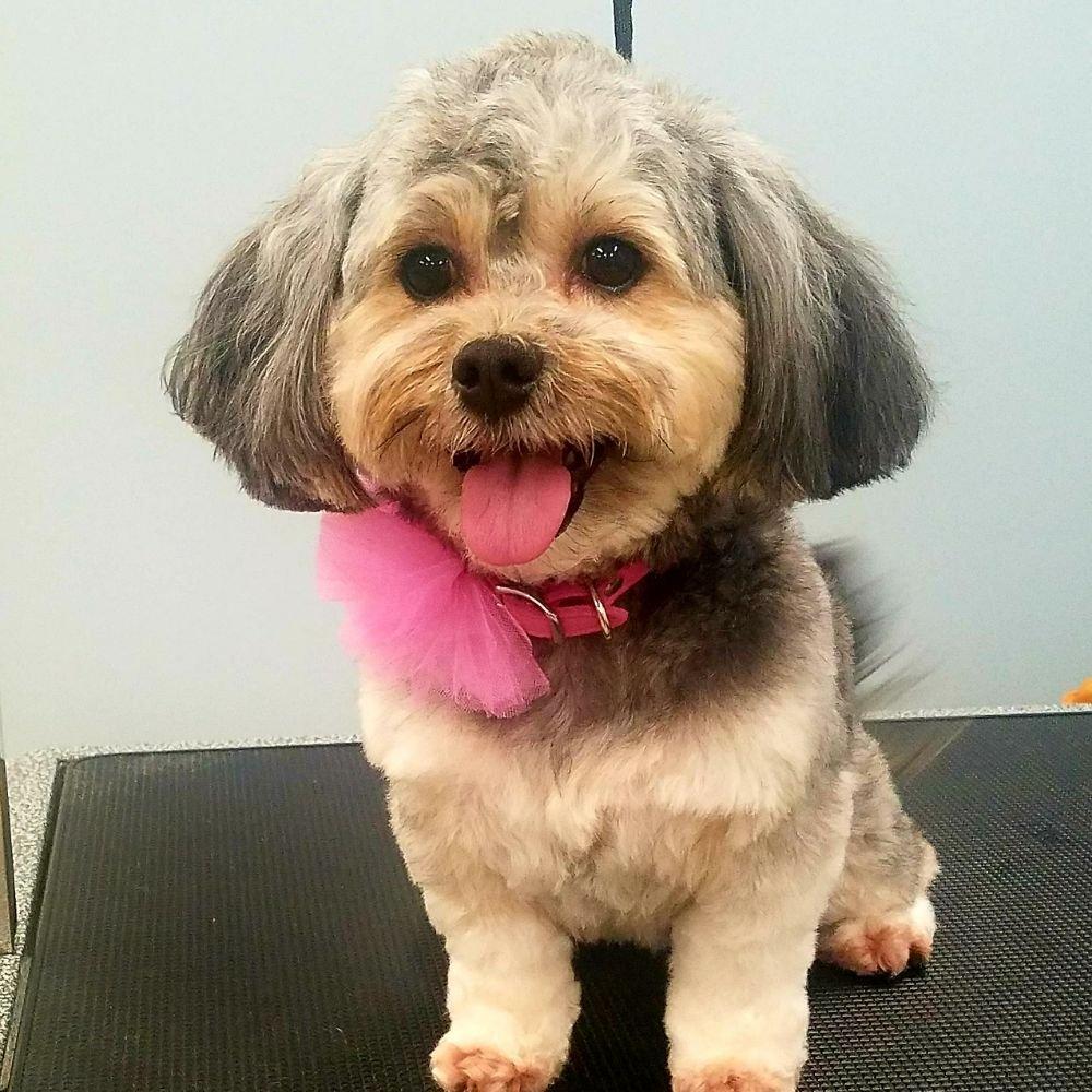 Lux Pet Salon & Daycare: 8011 20th St SE, Lake Stevens, WA