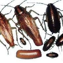 Rayco Pest Control - 12 Photos - Pest Control - 704 SW 27th