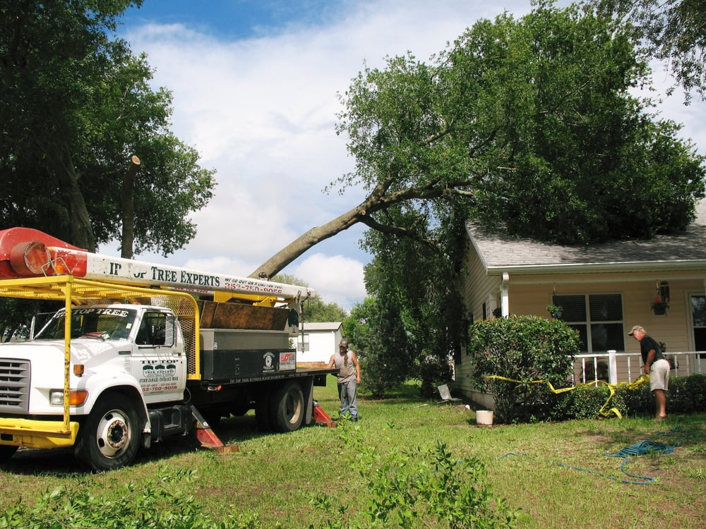 Tip Top Tree Experts Llc: 41711 Lillian Ln, Weirsdale, FL