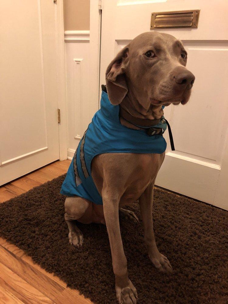 Classy Canines: Springfield, VA