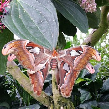 niagara parks butterfly conservatory 374 photos 91. Black Bedroom Furniture Sets. Home Design Ideas