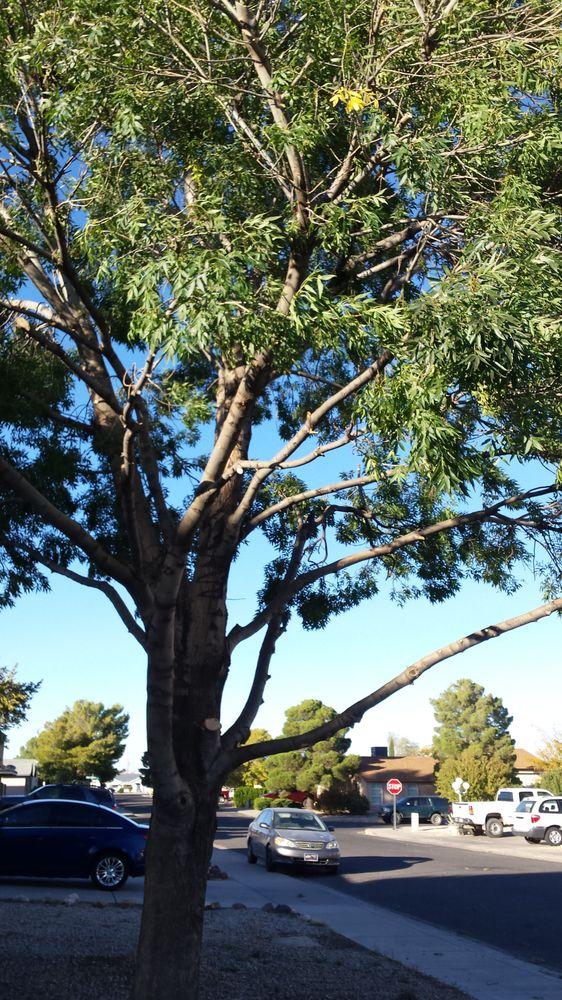 Sims Tree Service: 2910 E John L Ave, Kingman, AZ