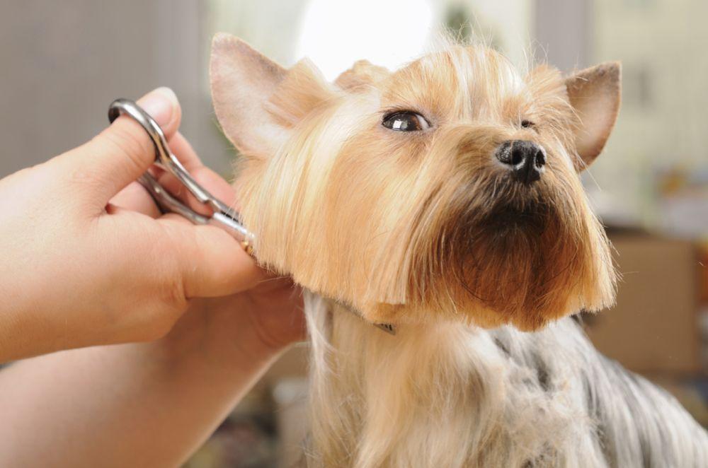 Wag N' Wash Natural Pet Food & Grooming