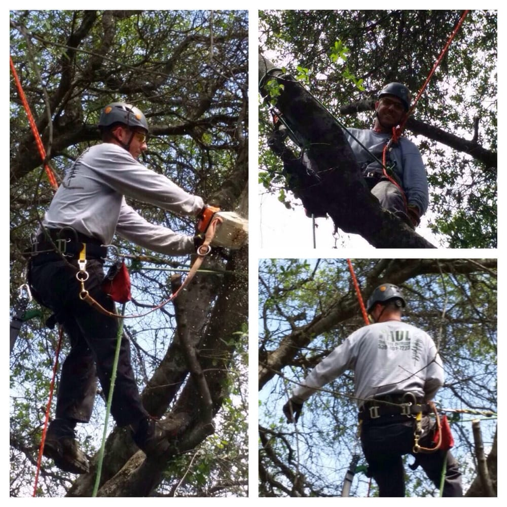 Paul The Tree Climber: Auburn, CA
