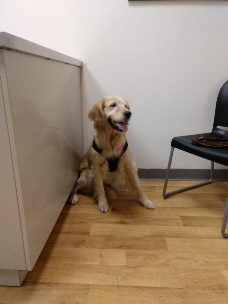 Family Pet Hospital: 10400 Watson Rd, Saint Louis, MO