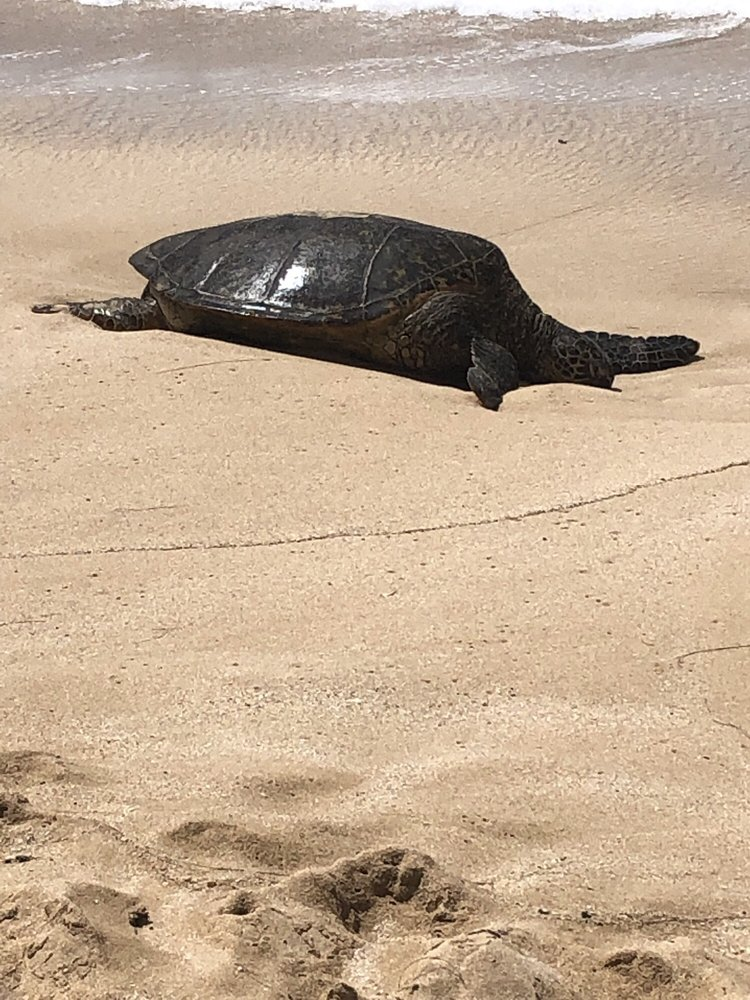 Turtle Bay Hidden Beach: Turtle Bay Resort, Kahuku, HI