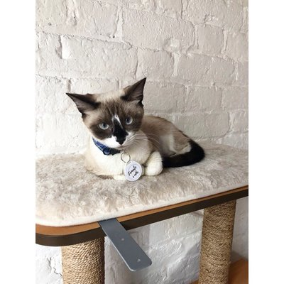 746ac422 Photo of Pounce Cat Cafe - Charleston, SC, United States. This little lady