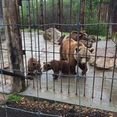 Photo Of Living Treasures Wild Animal Park Donegal Pa United States Mama