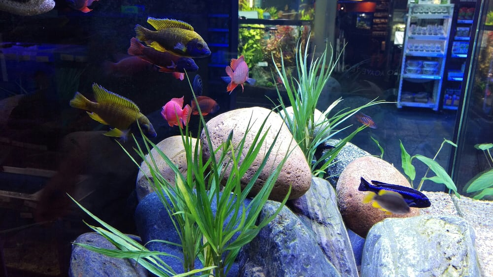 Photos for Age of Aquariums - Yelp