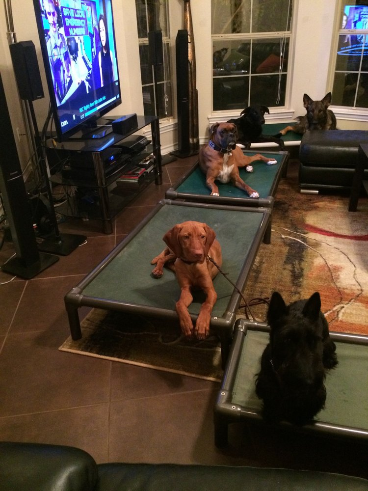 Cat For Dogs: Austin, TX