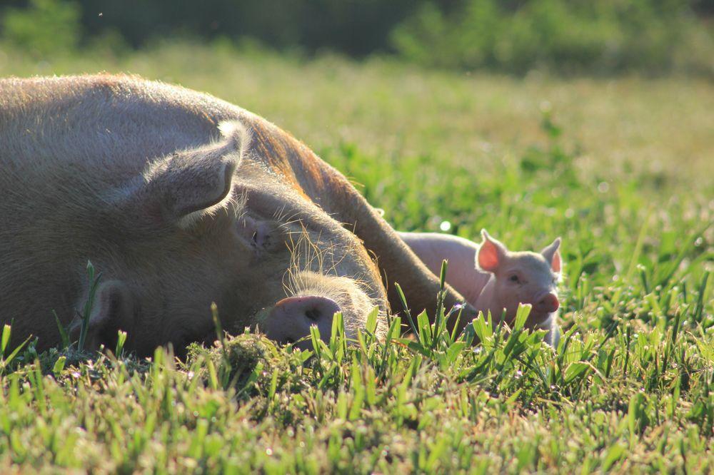 Thompson Farms: 2538 Dixie Rd, Dixie, GA
