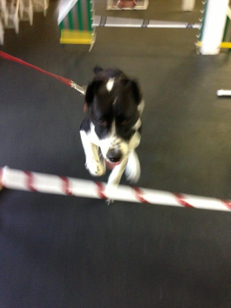 Dog Training Rockaway Nj