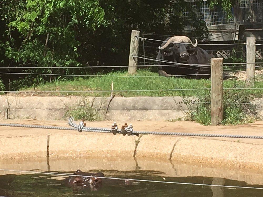 Louisiana Purchase Gardens Zoo 65 1405 Bernstein Park Rd Monroe La