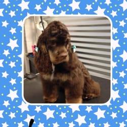 Dog e fresh 47 photos 18 reviews pet groomers 5001 s parker photo of dog e fresh aurora co united states solutioingenieria Images