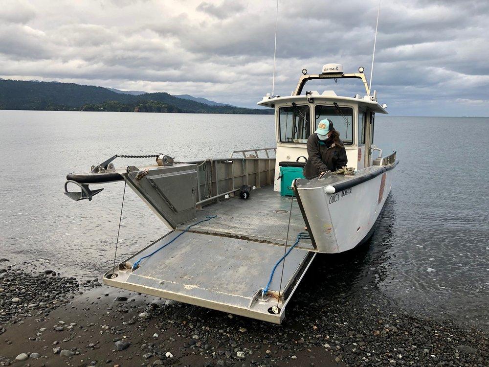 Mako's Water Taxi: 4308 Homer Spit Rd, Homer, AK