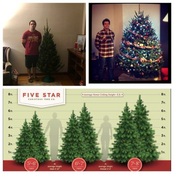 Five Star Christmas Tree - 146 Photos & 371 Reviews - Christmas ...
