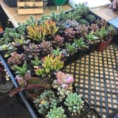 Photo Of Heavenly Vintage Nursery Fountain Valley Ca United States 40 Succulents