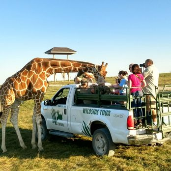 Safari In Ohio >> The Wilds 274 Photos 77 Reviews Parks 14000 International Rd
