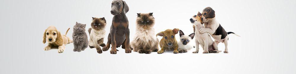Bonjour's Puppy Parade: 1700 S Hillside St, Wichita, KS