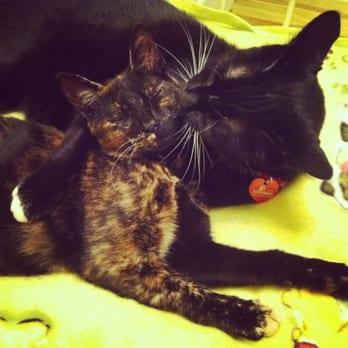 Alameda Cat Adoption