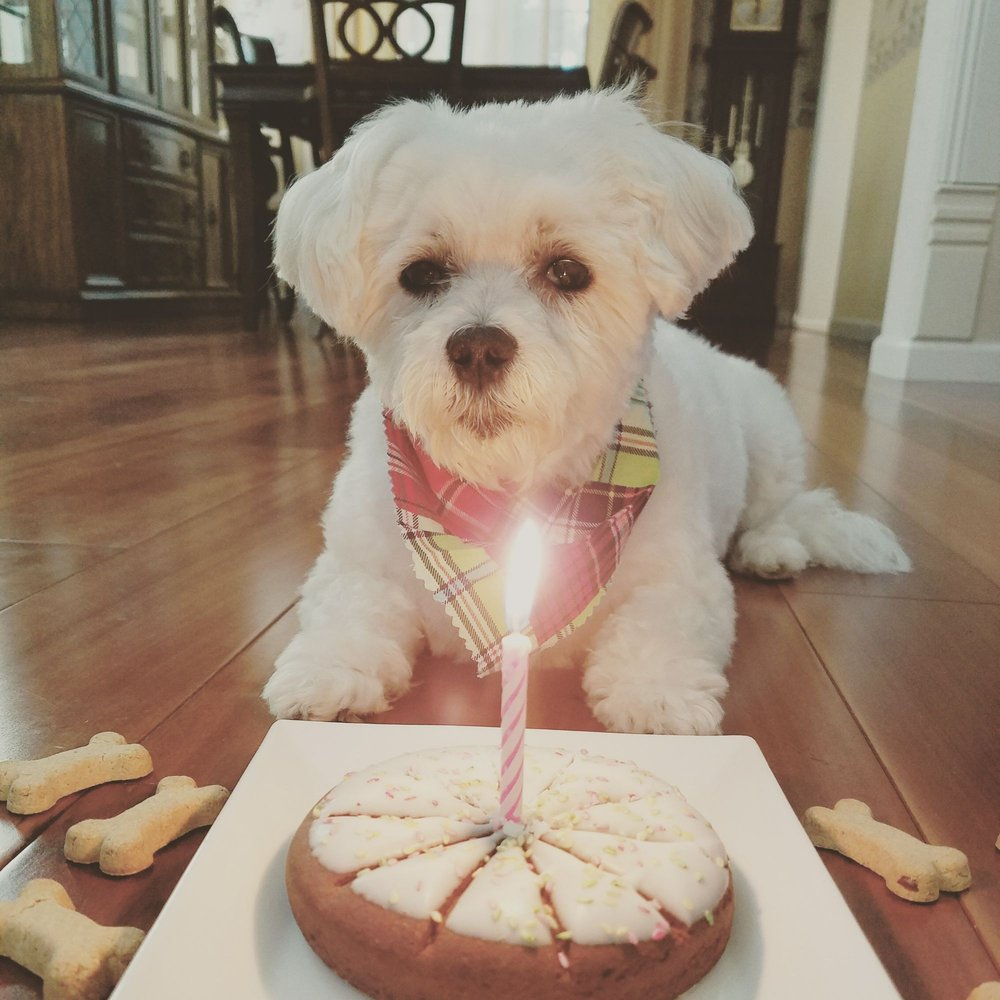 Birthday Cake Pie From Petsmart For My Baby I Added The Candle