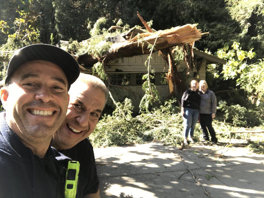 Chandler's Tree & Stump Service: 8519 171st Ave SE, Snohomish, WA