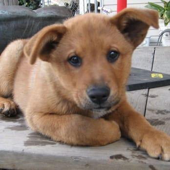 Peninsula Humane Society & SPCA - (New) 52 Photos & 64