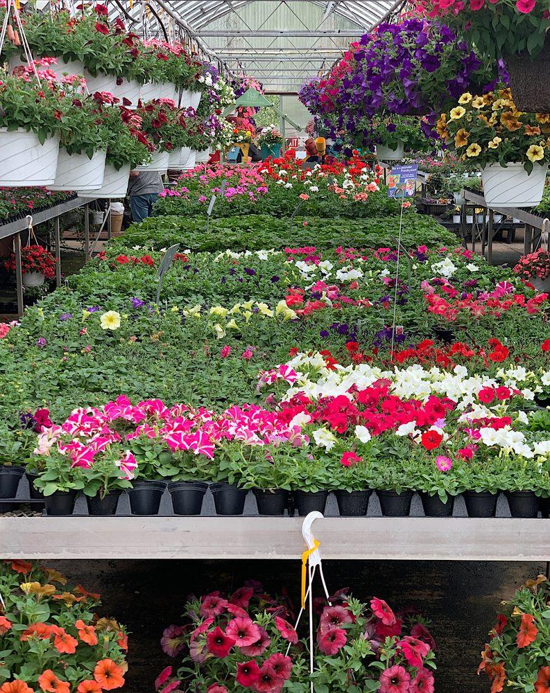 Mazzocca's Greenhouse: 10750 Corundite Rd NW, Massillon, OH