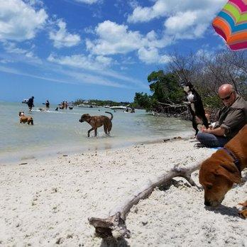 Photo Of Dog Beach Fort Myers Fl United States