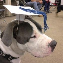 Ringers Dog Training Tarentum Pa