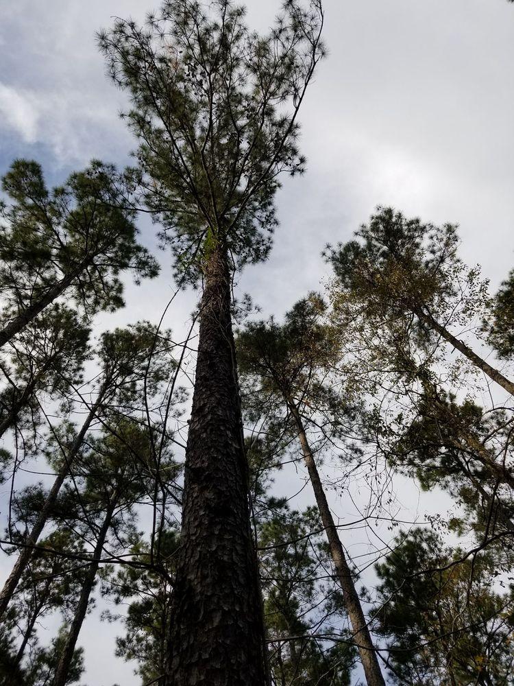 Sabine National Forest: 5050 Hwy 21 E, Hemphill, TX