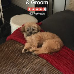 Top dog wash groom 39 photos 96 reviews pet groomers 3371 photo of top dog wash groom san diego ca united states solutioingenieria Image collections