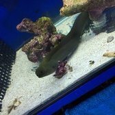 Photo Of Living Reef Aquariums   Oakland Park, FL, United States. Eeel