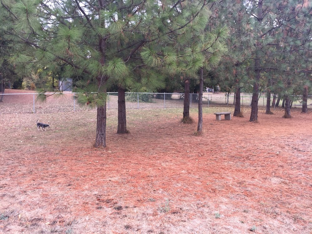 C&C Dog Park: 24898 OR-99W, Junction City, OR