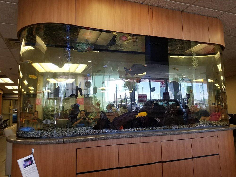 Monster Sizes Fish Tank Yelp