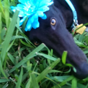 Greyhound Pets Of America Animal Shelters 7047 Belvedere Rd