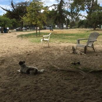 Main Street Dog Park Alameda Ca