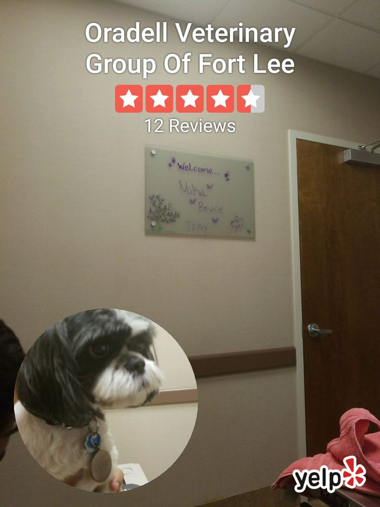 Oradell Veterinary Group Of Fort Lee: 1200 Palisade Ave, Fort Lee, NJ