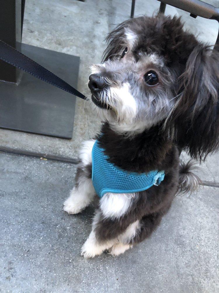 Uptown Pup