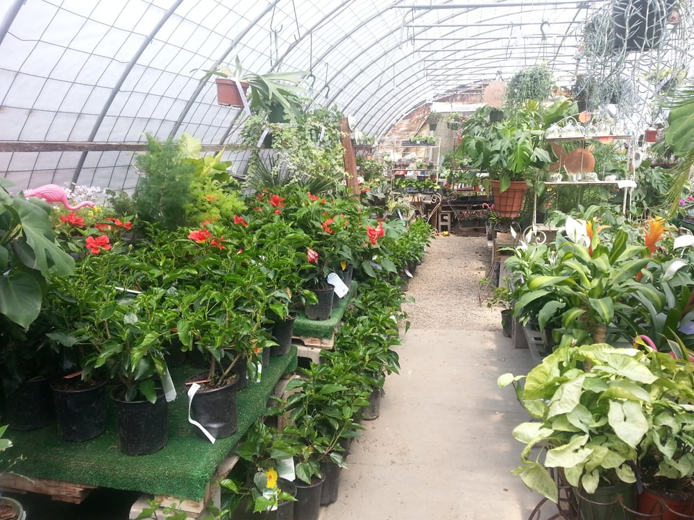 Photo Of Rehmu0027s Nursery U0026 Garden Center   Albuquerque, NM, United States