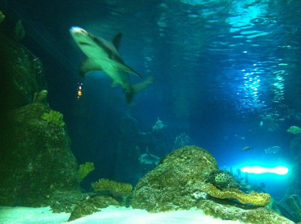 Shark Yelp