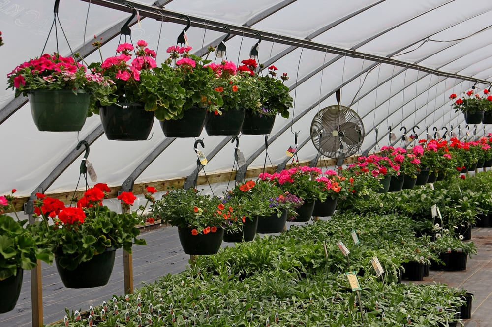 Red Barn Greenhouse: 60275 Rambadt Rd, Centreville, MI
