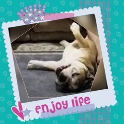 Ashley's Dallas Area Dog Boarding - 45 Photos - Dog Walkers