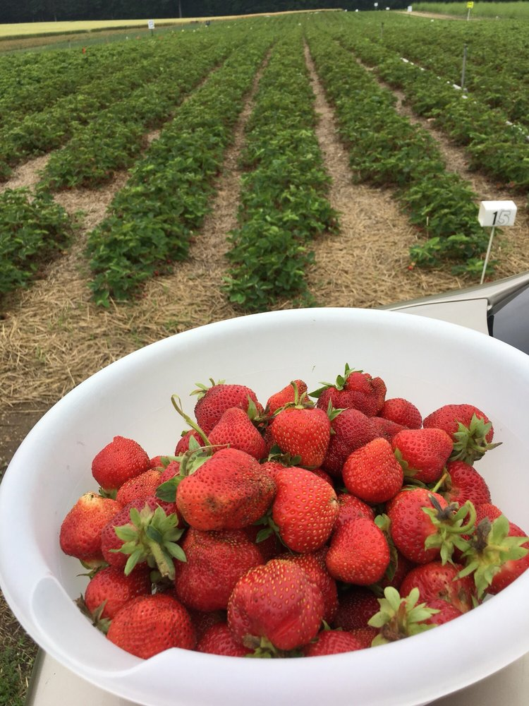 Harvey's Farm: 2651 15 Mile Rd, Tekonsha, MI