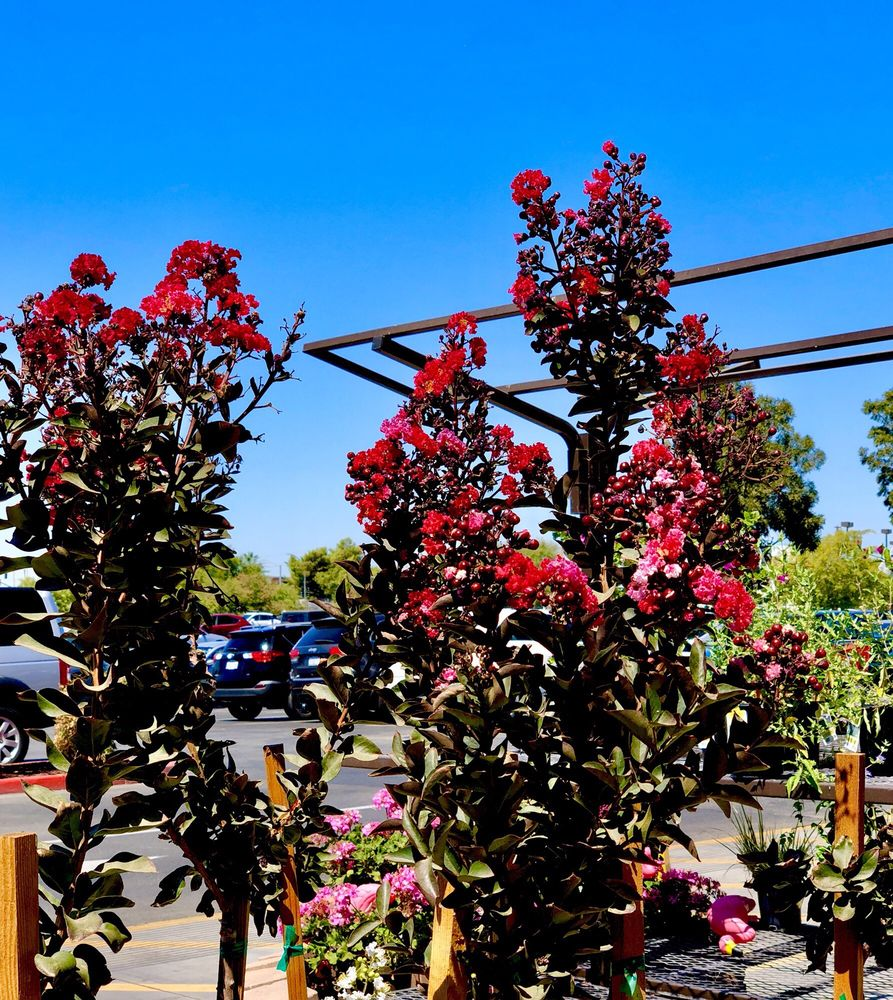 Lowe's Home Improvement: 7825 Rosedale Highway, Bakersfield, CA